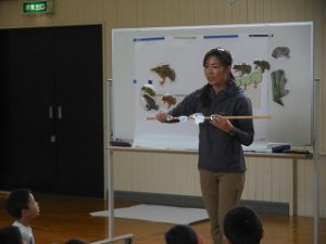 丹波篠山には、どんなカエルがいるかな?